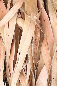 [Image: willow-bark-article.jpg]